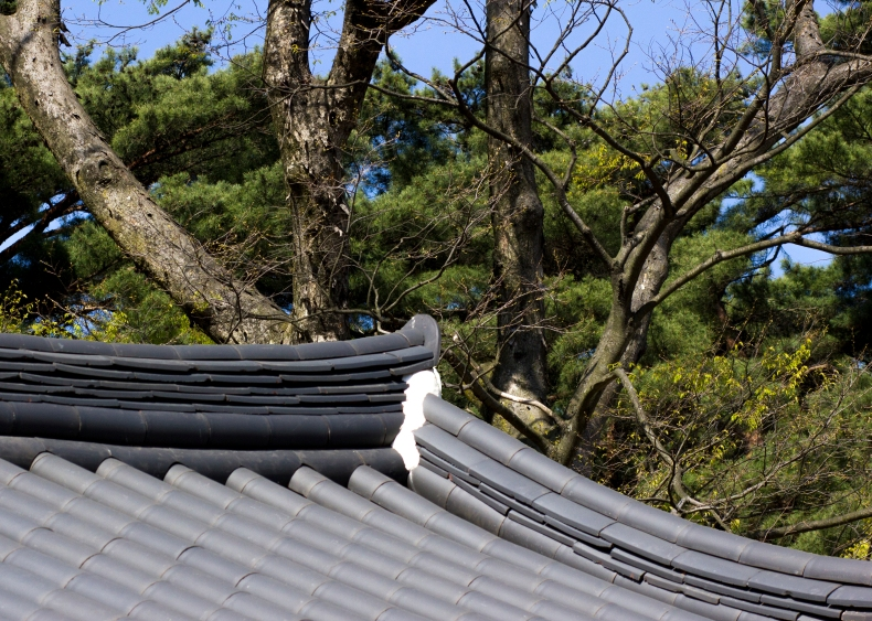 Namhansanseong Roof Tree Alignment