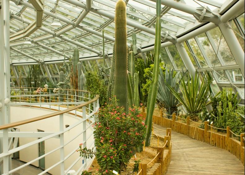 Biosphere cacti