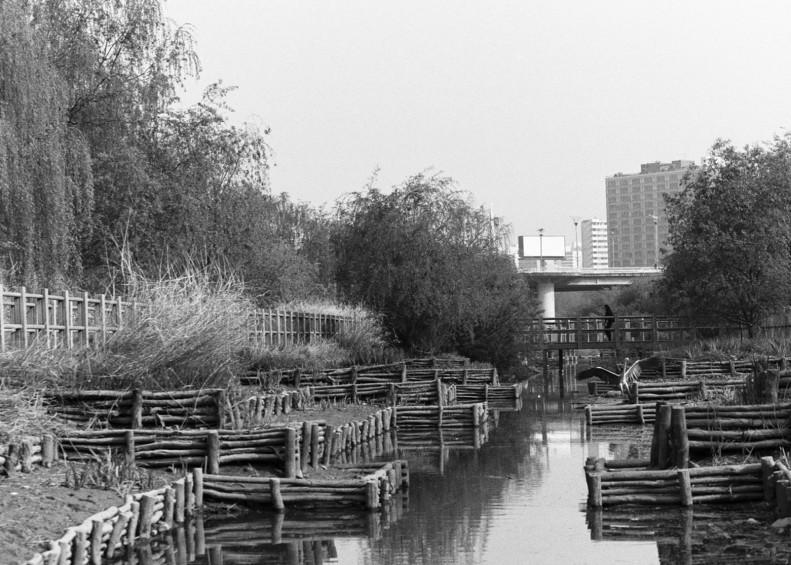 Bird Landing Seoul Canal shrunk