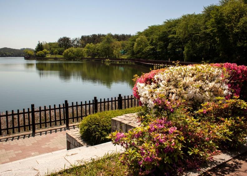 Eunpa Lake Flowers