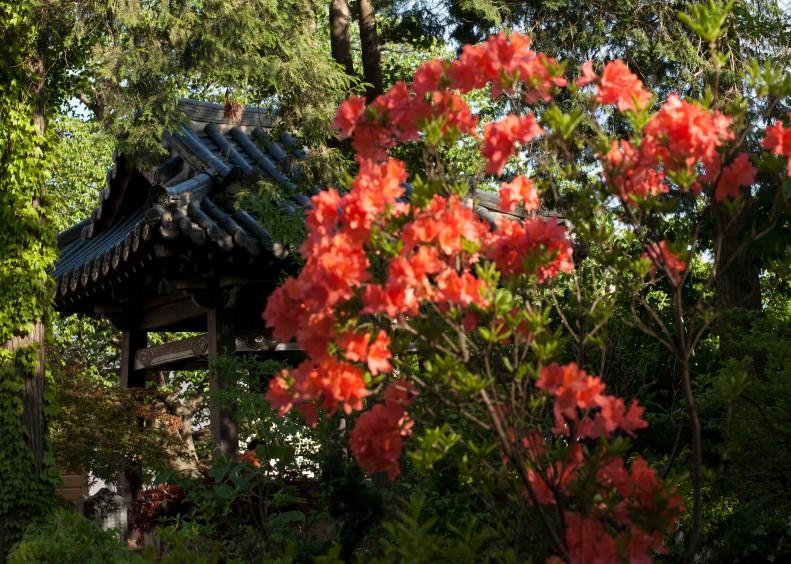 orange flower pavilion
